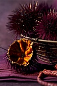 Sea urchins (topic: Provence)