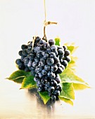 Bunch of Muscat grapes