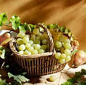 Frische grüne Weintrauben in einem Korb