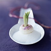 Raw turnips on a spoonful of castor sugar