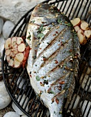 Sea bream with cut garlic head