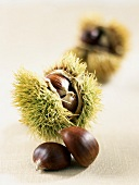 chestnuts and burrs
