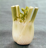 Fennel bulb (topic :light diners)