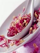 Getrocknete Ispahan-Rosenblütenblätter auf Löffel und Teller