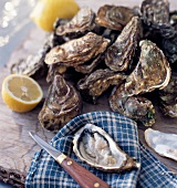 Openning oysters