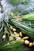 Pine nuts and pine needles
