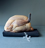 Whole raw guinea-fowl