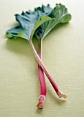 Two stalks of rhubarb