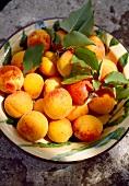 Frische Aprikosen in Schale