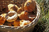 Basket of Sanguin mushrooms