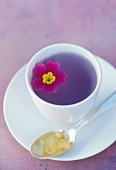 Primrose herb tea