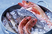 Sea bream, mullet and trout on ice
