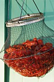 Fresh crabs in a wire basket