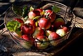 metal basket of apples