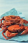 Velvet swimming crabs (topic: velvet swimming crab)