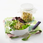 Salat mit jungen Sprossen