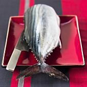 A tuna tail piece