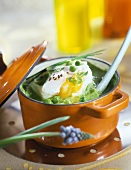Poached egg with cream of fresh peas