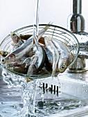 Sardellen im Sieb waschen