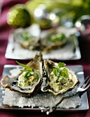 Oysters in Canaille sauce