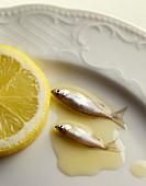 Sardines in oil