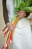 Frau hält ein Bündel Rhabarberstangen