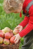 Child picking apples