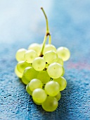 Bunch of white Chasselas de Moissac grapes