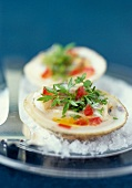 Dog cockel shellfish with diced tomatoes and herbs