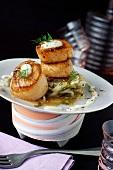 Roast scallops with chicory fondue