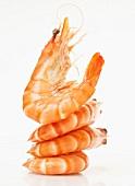 Pile of shrimps
