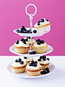 Bilberry cup cakes