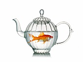 Goldfish in a glass teapot