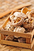 Small crate of dried mushrooms