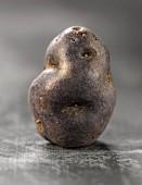 Vitelotte potato