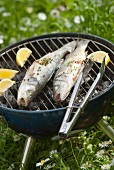 Grilled bass on the barbecue