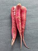 Big organic radishes