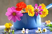 Edible flowers :wild pansy, cosmos and nasturtium