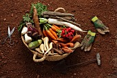 Composition with tubers :turnips, sweet potatoes, carrots, parsnips, salsifies and cassava