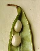 Beans in their pod