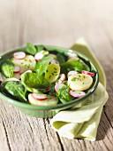 Salat mit Kartoffeln, Spinat und Radieschen
