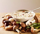 Cream of cep soup