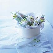 Vegetarian and lentil sprout spring rolls
