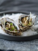 Oysters with ginger sauce