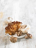 Variety of mushrooms :button mushrooms, golden mushrooms and shitakes