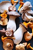 Different varieties of mushrooms