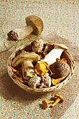 Selection of mushrooms in a basket