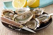 Geöffnete Austern auf einem Teller