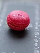 Rose-raspberry macaroon