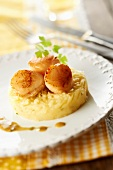 Mashed potatoes with seaweed butter with pan-fried scallops